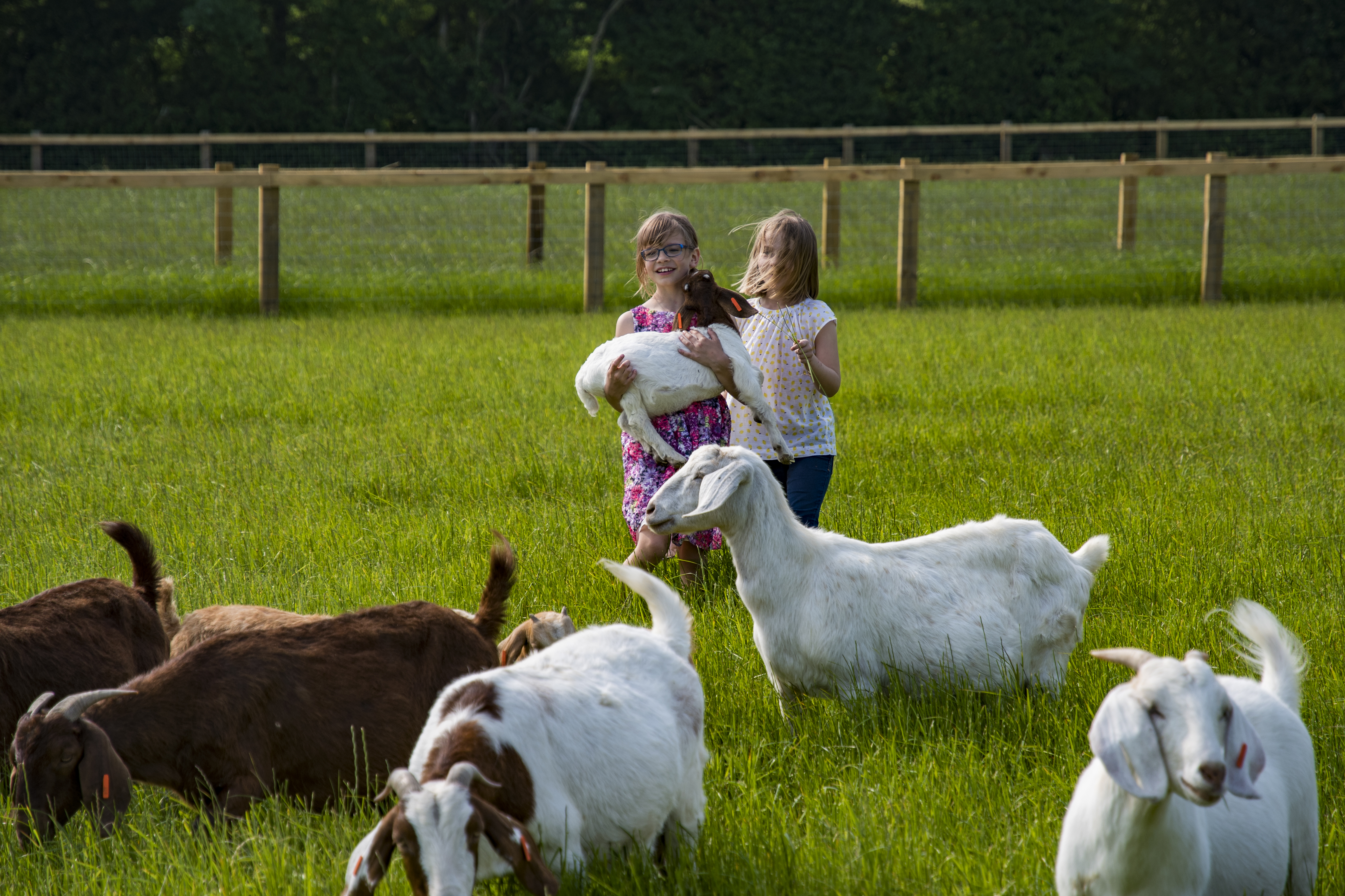 What do 'Meat Goats' look like?